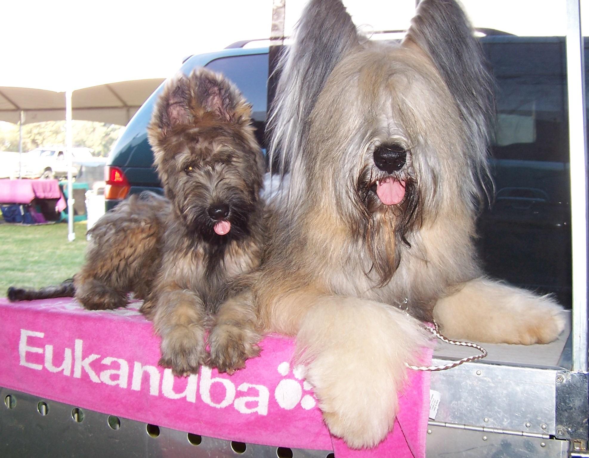 Amazing Puppies